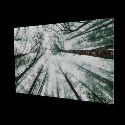 Tablou din sticla acrilica - Japanese forest0