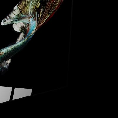 Tablou din sticla acrilica - silver betta fish1