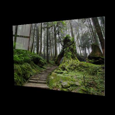 Tablou din sticla acrilica - walkway forest0