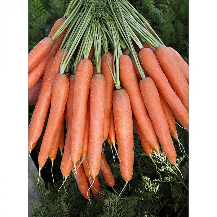 Seminte morcovi Presto F1 [0]