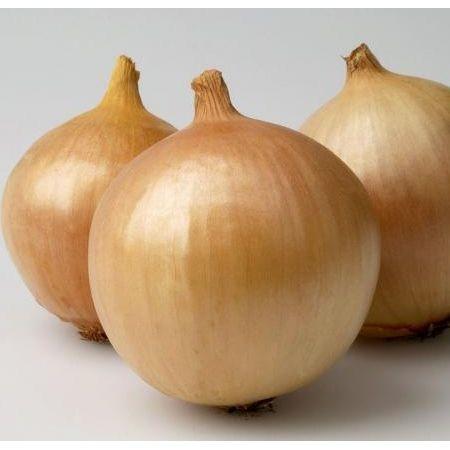 Semințe de ceapă Franzisco 0