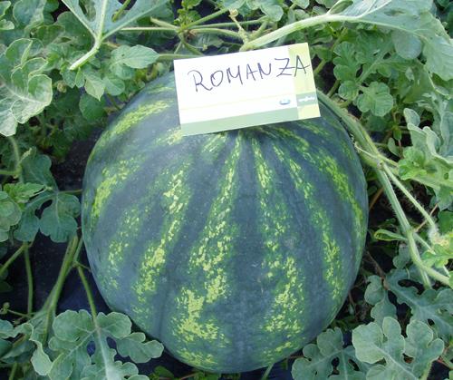 romanza-f1 0