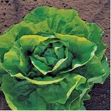 Salată PRONTO - 5 grame 0