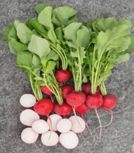 Semințe de ridichi de lună Roxanne F1 - 5.000 semințe 0