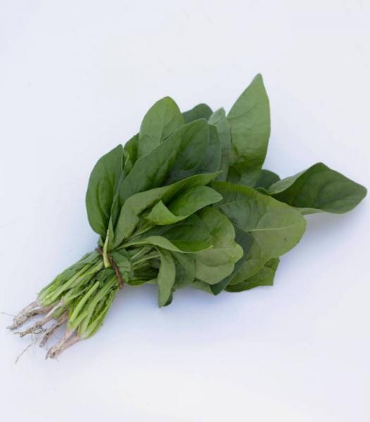 spanac-el-prado-f1-100-000-semințe 0