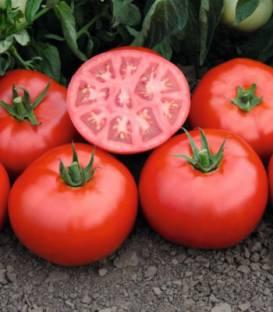 Seminte tomate Tomsk F1- 1.000 seminte 0