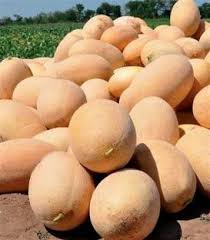 Semințe de pepene galben Bijour F1 (1000 semințe)0