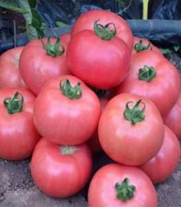 Seminte tomate roz Dimerosa F1 (500 seminte)