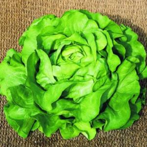 Semințe de salată Radian F1 ( 5000 semințe drajate)