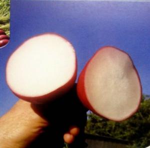 Semințe de ridichi de lună Rochas F1 - 5.000 semințe0