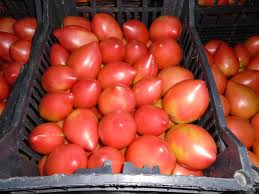 Seminte de tomate Rugby F1, nedeterminate1