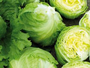 Salată Expresion  -  5000 semințe drajate