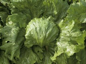 Salată Saula- 5000 semințe drajate