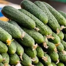 Semințe de castravețiSpino F1, tip cornichon (100 semințe)0