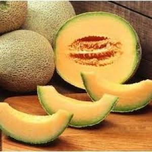 Semințe de pepene galben tip Ananas, Tagus F1 (500 semințe)1