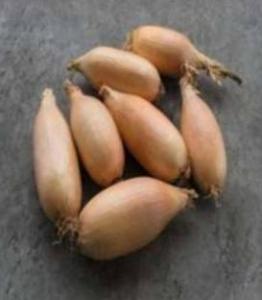 Semințe de ceapă Kappa - 10.000 semințe [1]