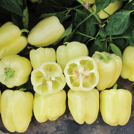 Seminte de ardei gras Blancina F1 (500 seminte)