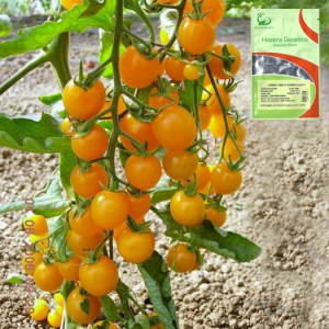 Seminte de tomate galbene Summer Sun F1 (50 semințe)