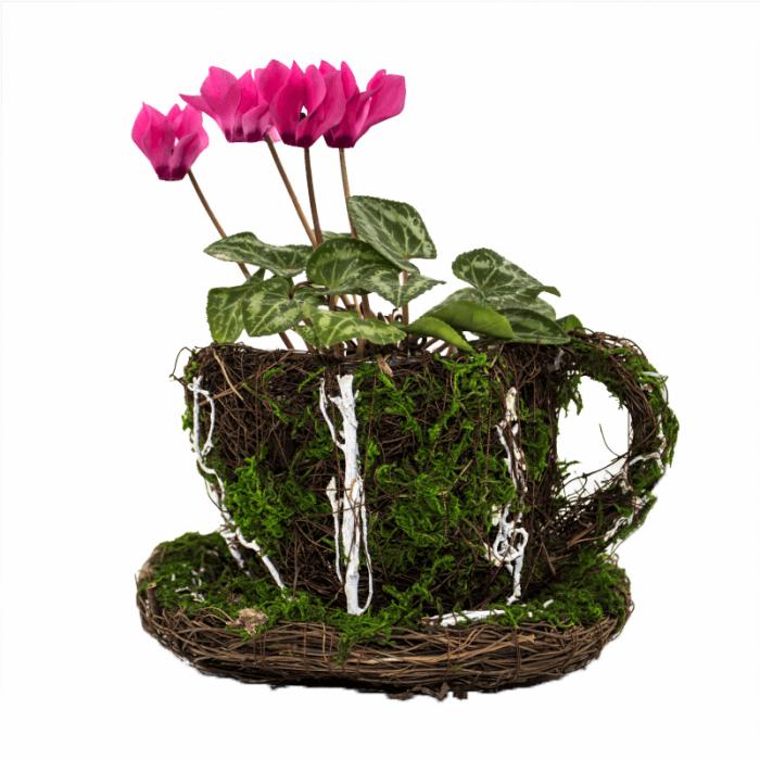 Aranjament floral cescuta Cyclamen 1