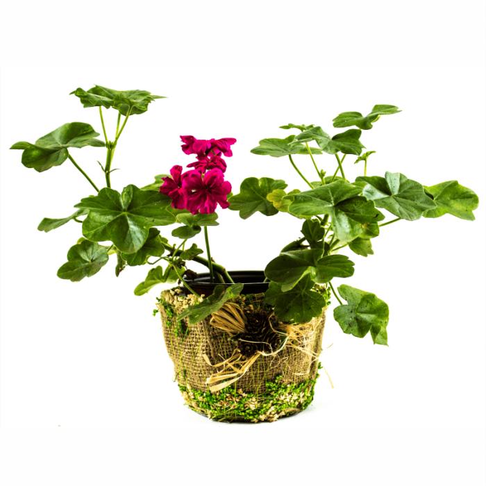 Aranjament floral cu muscate 1