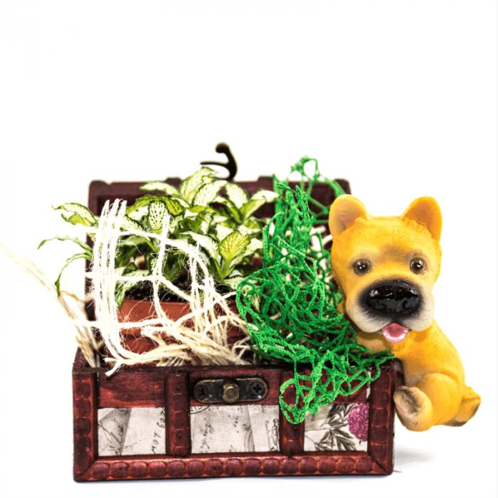 Aranjament floral cufar ARA cu Phitonia verde 1