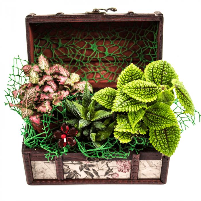 Aranjament floral cufar mix cu cactus Hawortia, Phytonia 1
