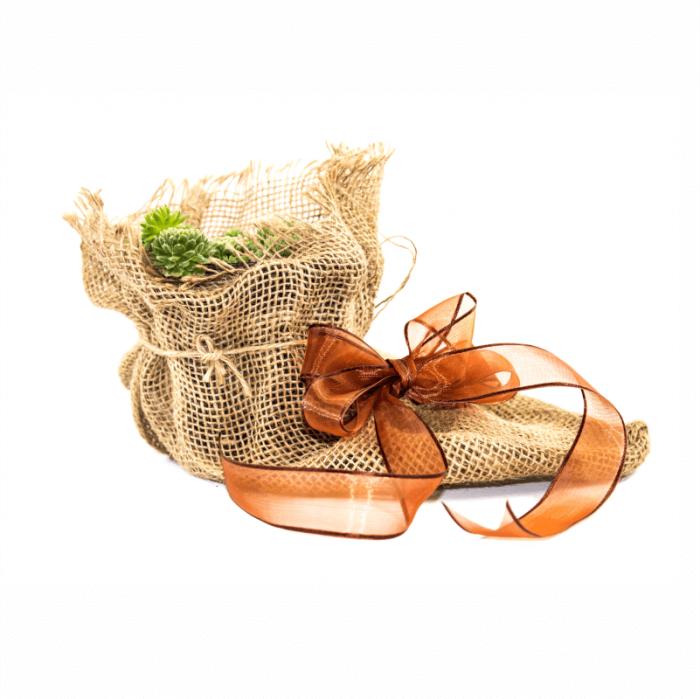 Aranjament floral din sac de iuta si Sempervivium 1