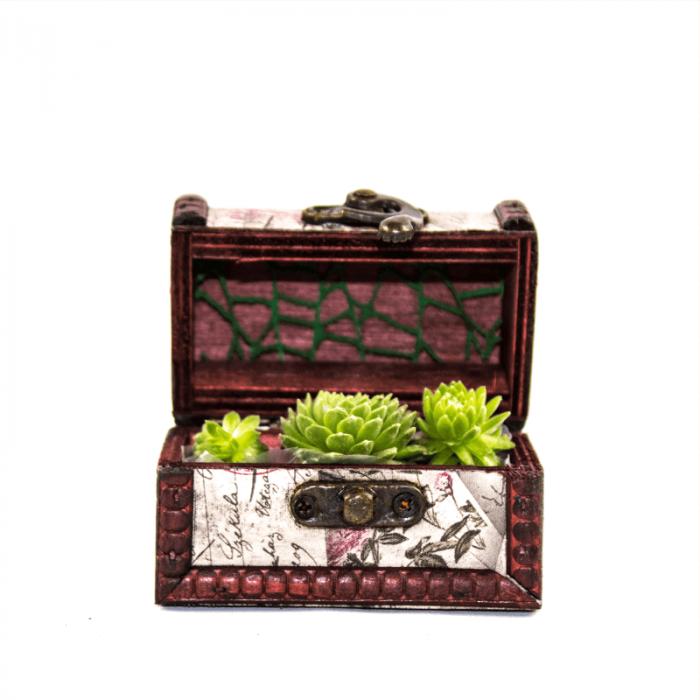 Aranjament floral  mini cufar cu sempervivum 0
