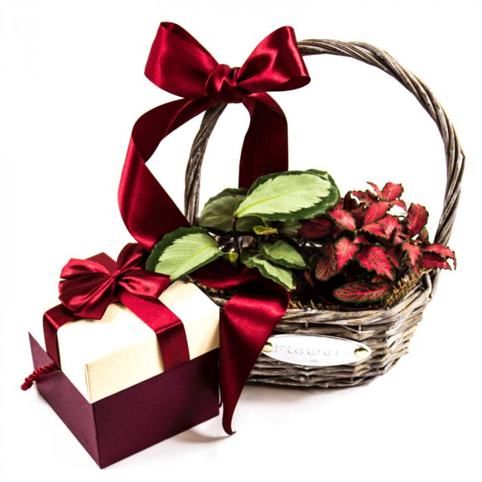 Aranjament floral mix cu Calathea si Phytonia +cutie cadou cu seminte sau bulbi. 1