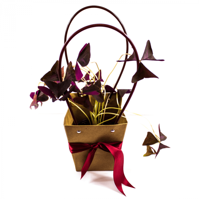 Aranjament floral Norocel cu plasa decor si trifoi norocos [0]