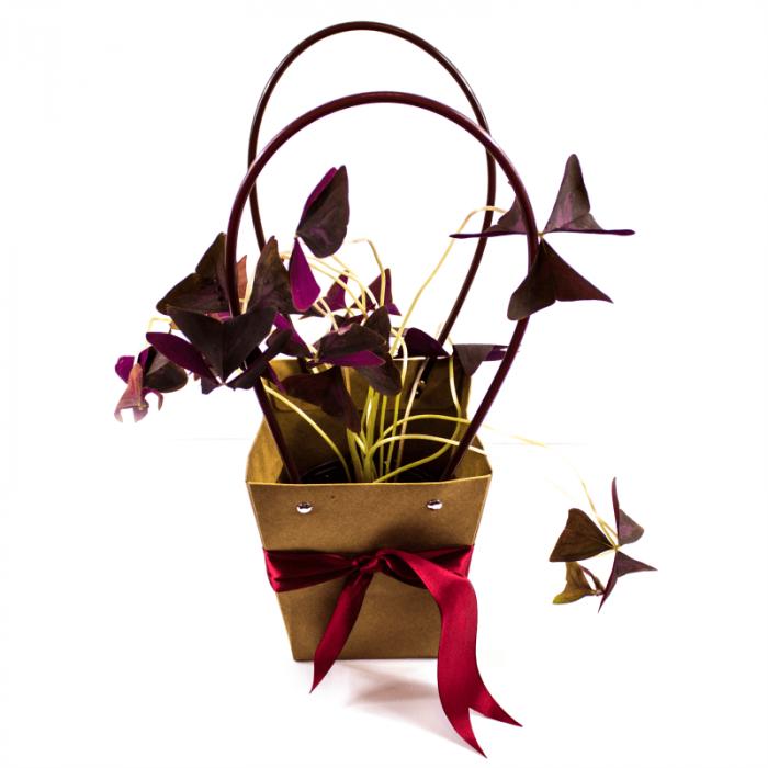 Aranjament floral Norocel cu plasa decor si trifoi norocos [1]