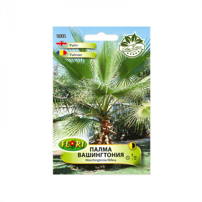 Seminte de arbust, Florian, palmier Washington, 1 g 1