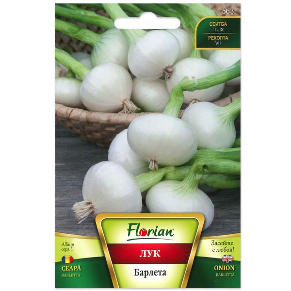 Seminte de ceapa Barleta, Florian, 2 grame 0