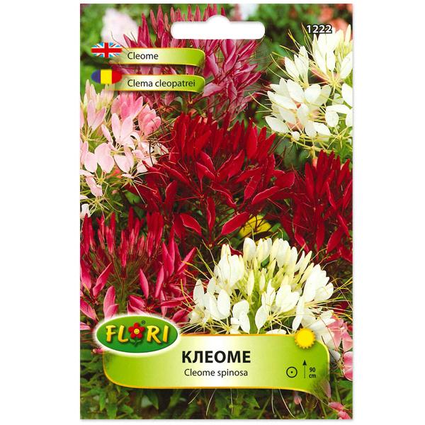 Seminte de cleoma - floare paianjen, Florian, 0.7 grame 0