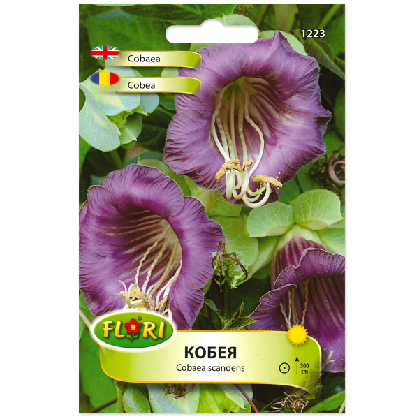 Seminte de cobea violet, Florian, 0.3 grame 0