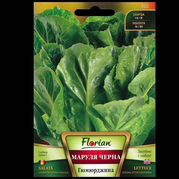 Seminte de salata Gyumyurdzhina neagra, Florian, 2 grame 1