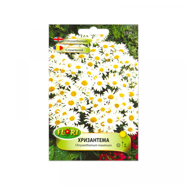 Seminte flori, Florian, Crizantema, 0,5 g 0