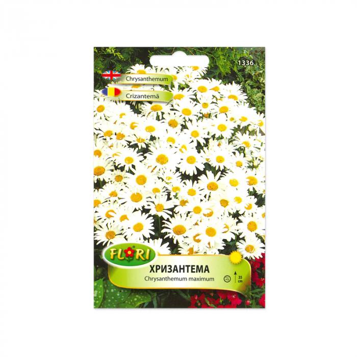 Seminte flori, Florian, Crizantema, 0,5 g 1