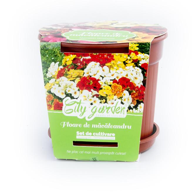 Set de cultivare Flori-Macaleandru 1