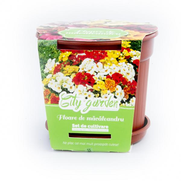 Set de cultivare Flori-Macaleandru 0