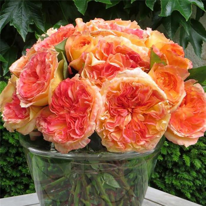 Trandafir-Henry Delbard [0]