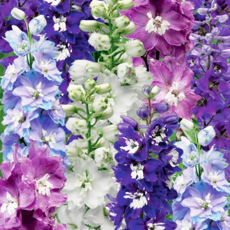 Delphinium elatum Fountain mix0