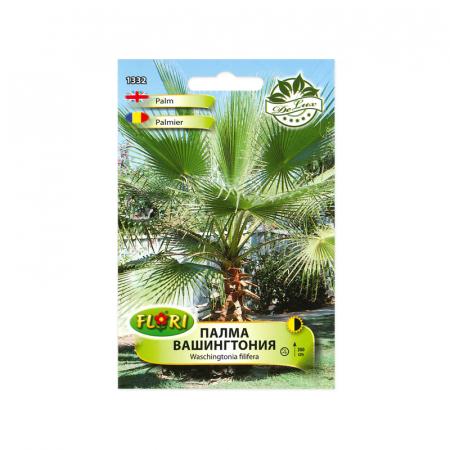 Seminte de arbust, Florian, palmier Washington, 1 g1