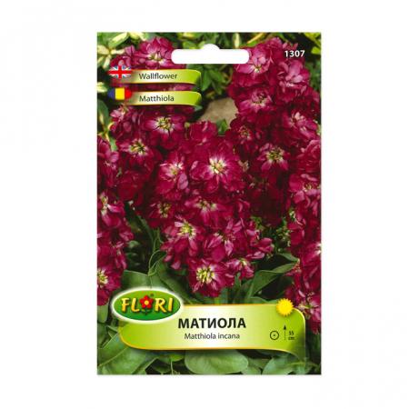 Seminte de flori, Florian, Matthiola incana, Florian1