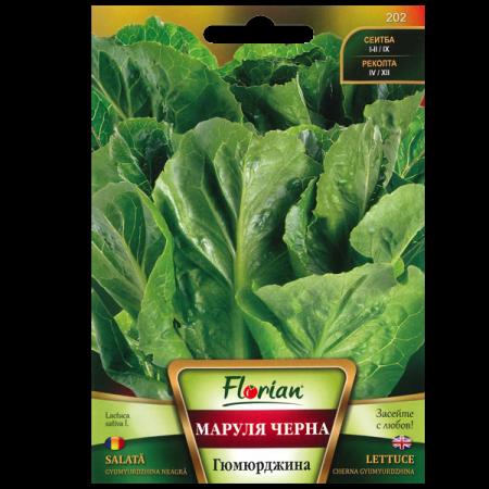 Seminte de salata Gyumyurdzhina neagra, Florian, 2 grame1