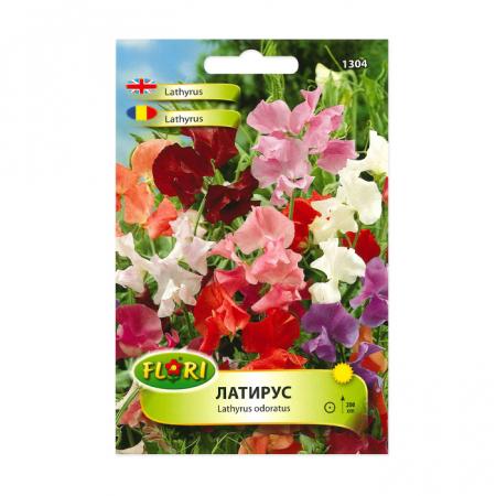 Seminte flori, Florian, Lathyrus mamut-mazariche mamut, multicolor, 1.5 g1