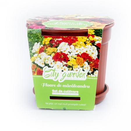 Set de cultivare Flori-Macaleandru1