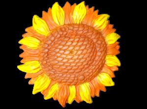 Floarea soarelui2