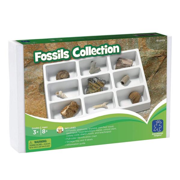 Kit paleontologie - Fosile 1