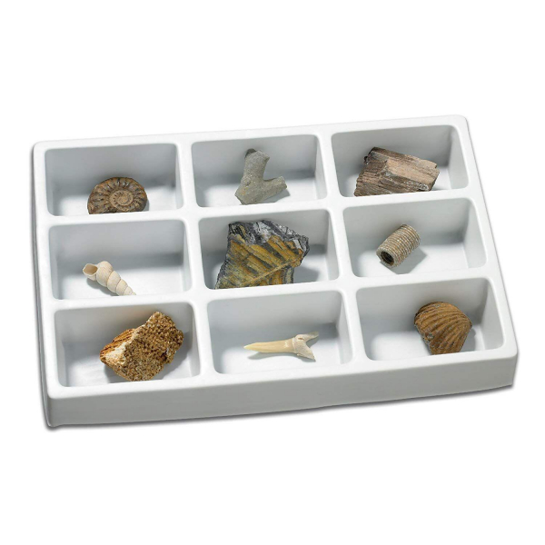 Kit paleontologie - Fosile 0